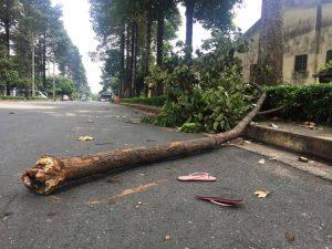 Hiện trường vụ việc, nhánh cây rơi vào đầu khiến nạn nhân tử vong
