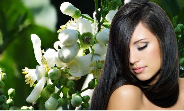 Chăm sóc mái tóc khỏe đẹp từ tinh dầu bưởi