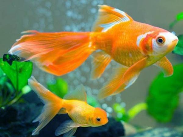 Nằm mơ thấy cá chết có ý nghĩa gì chơi xổ số con gì may mắn