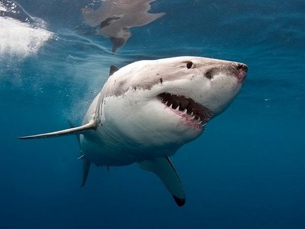 Mơ-cá-mập-đánh-con-gì-min