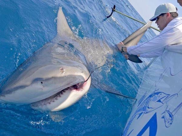 Mơ thấy bắt cá đánh con gì, là điềm báo tốt hay xấu?