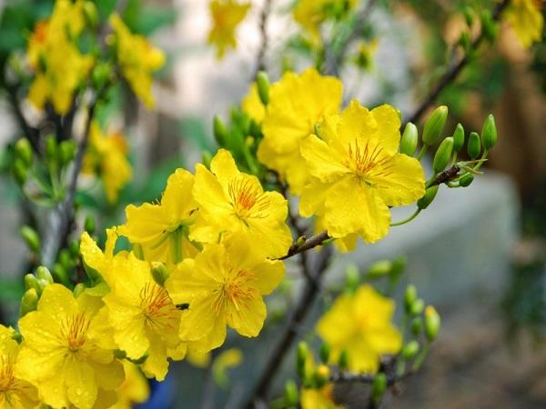 Mơ thấy hoa màu vàng báo điều gì, con số liên quan