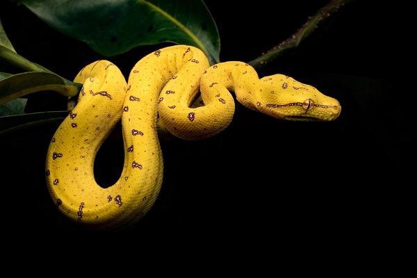 Nằm mơ thấy rắn vàng đánh con gì